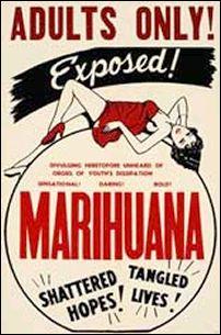 Cannabis malo